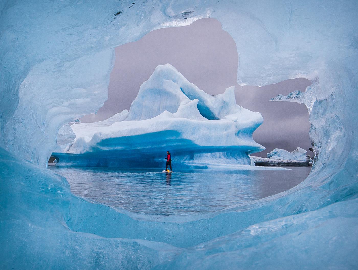 Glacier bear